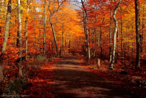 fall colors in the best places to see the most beautiful door county fall