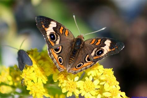 new song butterfly delco daily top ten top 10 butterfly songs