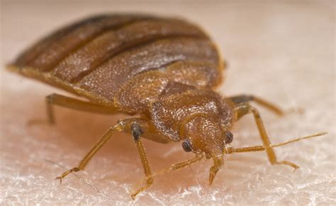 bed bug fumigation professional pest control and eradication in london oxfordshire hertfordshire