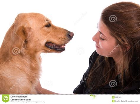 golden retriever owners golden retriever with owner stock photo image 5151470
