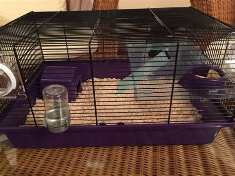 syrian hamster cage for sale truro cornwall pets4homes