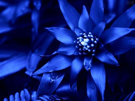 Blue Wedding Flowers Pictures types of blue flower names pictures blue flowers for