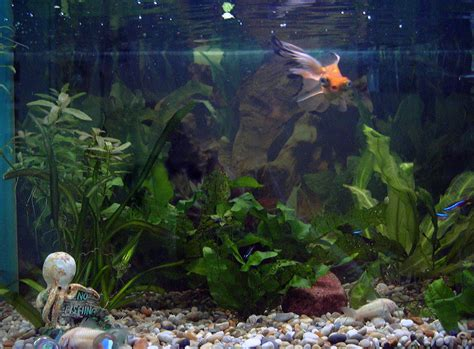 home aquarium file home aquarium jpg