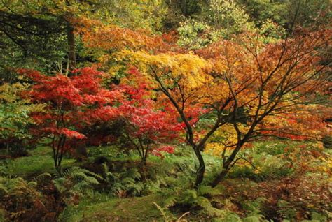 best maple tree varieties types of maple trees best trees to plant