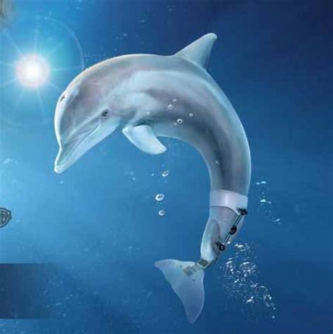 imagenes reales de winter el delfin winter la delfin curiosidades del mundo