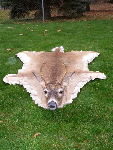 Deer Hide Rugs by The Gallery For Gt Whitetail Deer Hide Rug