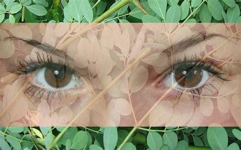 Obat Untuk Kesehatan Mata Minus manfaat daun kelor untuk kesehatan mata khasiatdaun