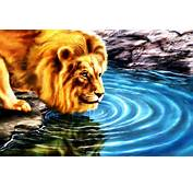 3D Lion Image Photos Of Free Wallpaper For Desktop Here We Have