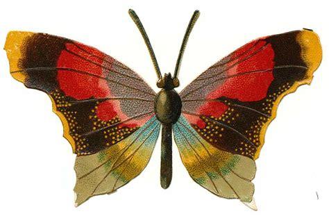 Xuping Set Kupu Kupu Free Box the graffical muse 5 vintage butterfly illustrations