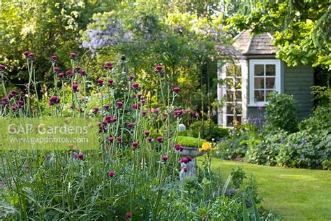 contemporary cottage garden gap gardens small contemporary cottage garden in early