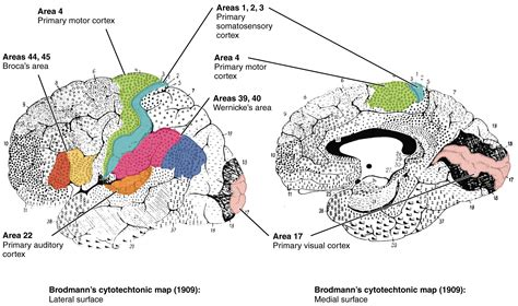 map of ta area new brain map accomplishes what scientists been