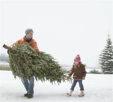 the 10 best christmas trees you can buy this holiday