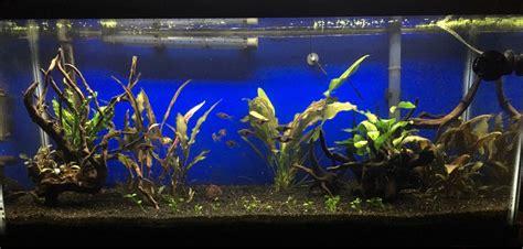 membuat aquascape low light help aquascaping my 30 gallon long the planted tank forum