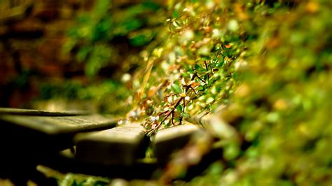 Artistic Photography by Artistic Photography Wallpaper Background 38282