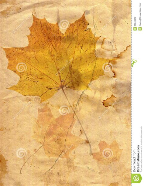 autumn leaf in grunge style stock photography image