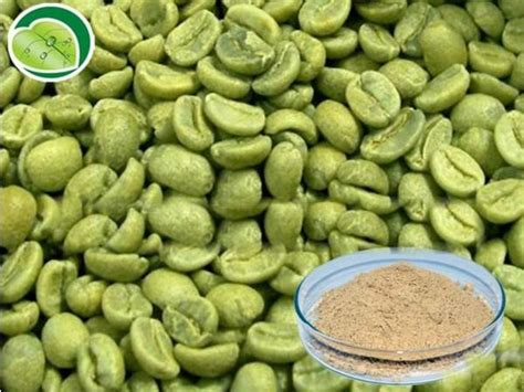 Green Coffee Bean green coffee bean powder 100 m s dennys