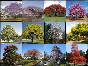 most beautiful flowering trees of the world not my