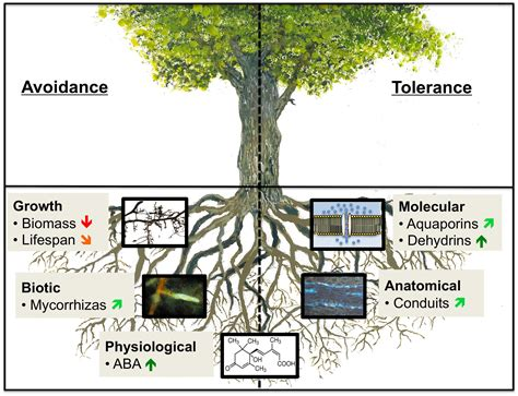 pin tree and root system on pinterest