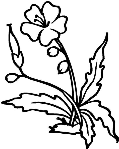 yellow hibiscus coloring page free printable hibiscus coloring pages for kids