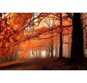 Fall Path Mist Leaves Forest Orange Trees Nature