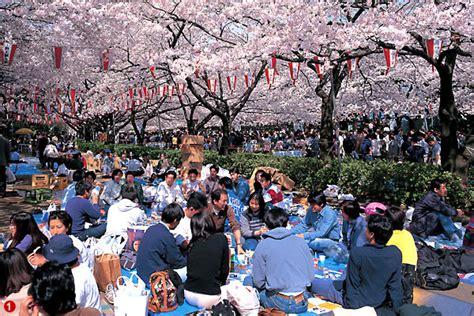 imagenes de japon cherry blossom viewing hanami everything japan