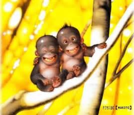 funny baby monkeys funny animal