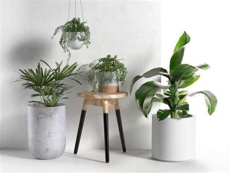 vasi per piante in terracotta vasi per piante vasi per piante tipologie di vasi per