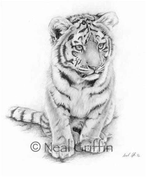tiger and cub tattoo designs tiger cub drawing search tattoos