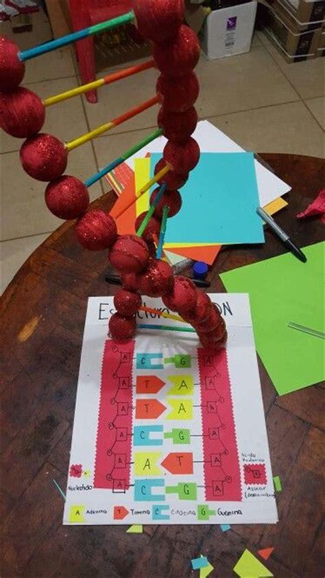 dna en maqueta estructura del adn maquetas pinterest