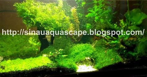 Co2 Package Aquascape 7 aquascape tanpa co2