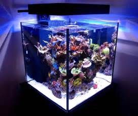 Solana 60 Gallon Cube with EcoXotic Panorama LED Fixture   reef tools