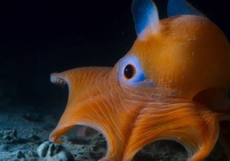 a few facts about blue you need to know before committing 10 facts you need to know about blue planet ii shortlist