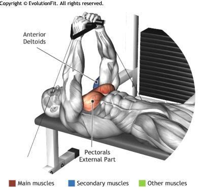 flat bench cable flye 10 best images about health fitness on pinterest