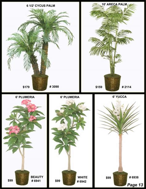 ficus tree areca palm outdoor phoenix palm willow tree