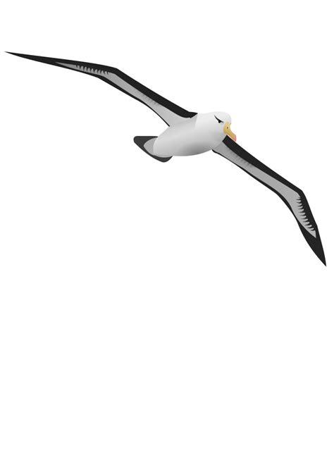 Albatross PNG, Albatross Transparent Background - FreeIconsPNG