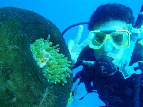 diving douglas diving douglas australia douglas dive