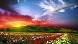 colorful landscapes colorful flower landscape wallpapers hd desktop and