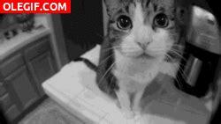 Imagenes Hola Gif   gif hola soy un gato gif 1325