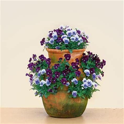 Strawberry Jar Violas Best Ideas For Fall Container Strawberry Jar Planter