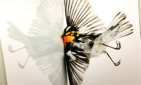 vivid photos showing bird window collisions startribune com