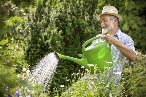 how often do you water a vegetable garden how often do you water the plants