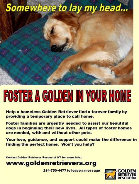 golden retriever rescue dc best 20 golden retriever rescue ideas on golden retriever quotes golden
