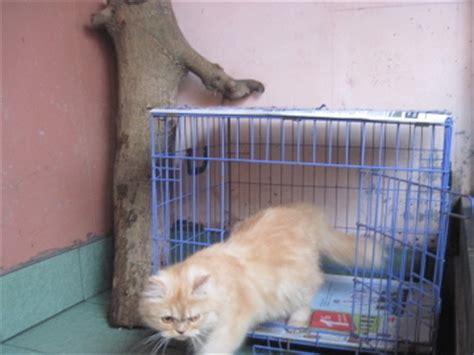 Kandang Kucing Indoor gambar kandang kucing foto kucing
