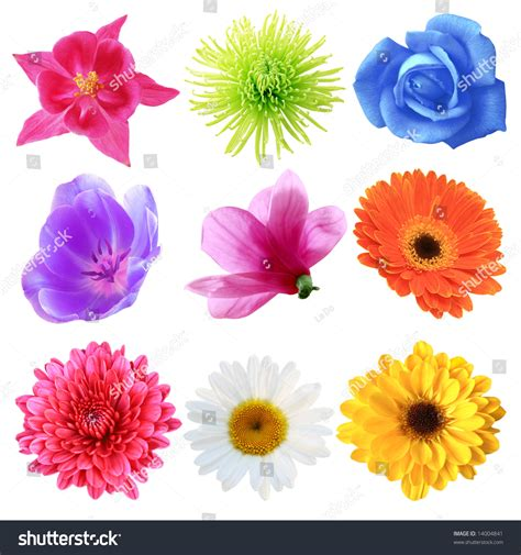 flowers by color set flowers different shapes color stock photo 14004841