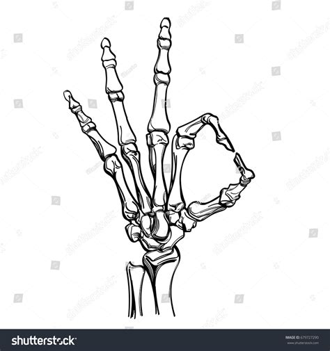 vector skeleton hand showing gesture ok stock vector