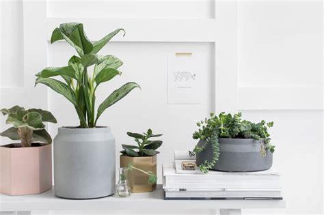 Mooie Planten Voor Binnen by De Mooiste Bloempotten Voor Je Planten Tanja Hoogdalem