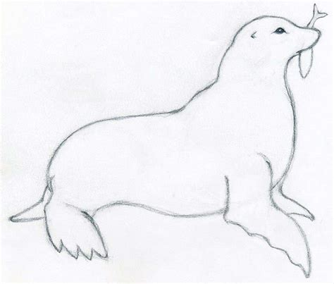 Sketches And Drawings by How To Draw A Seal