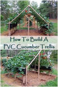 How To Make A Cucumber Trellis 78 best ideas about cucumber trellis on raised beds companion planting and gardening