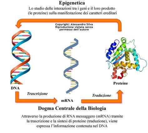 epigenetica e alimentazione l ambiente influenza i nostri geni e il comportamento