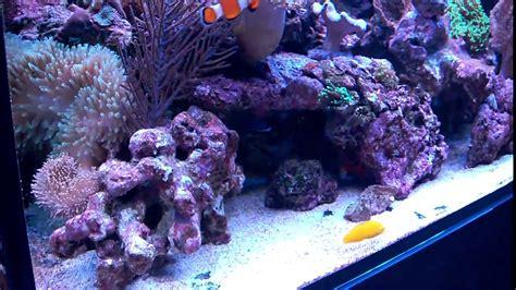 lade a led per acquario marino lade per acquario marino led plafoniere per lade